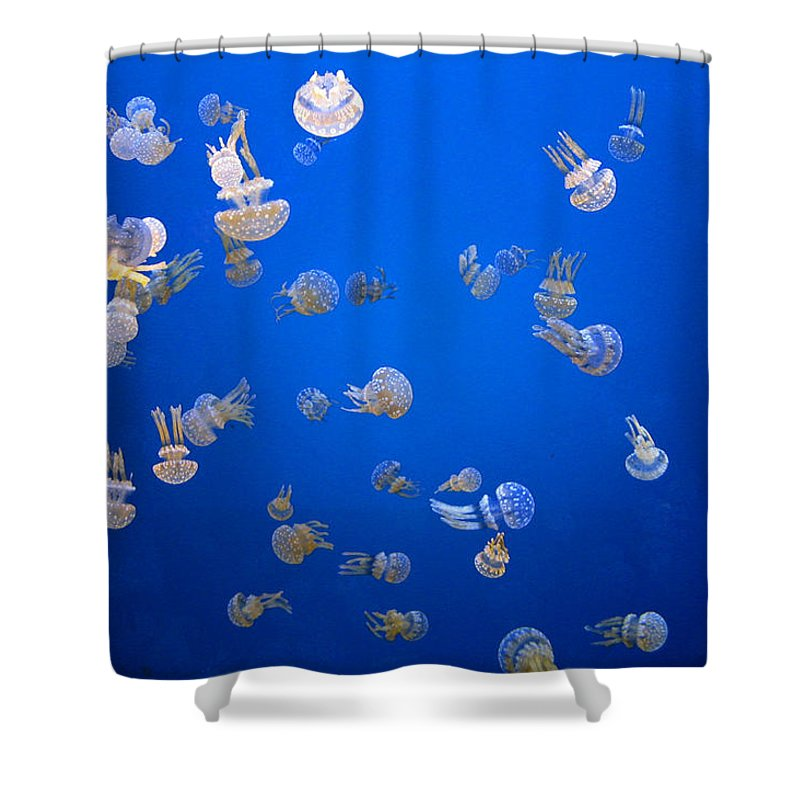 Shower Curtain featuring the photograph Jellyfish by Dan McCafferty
