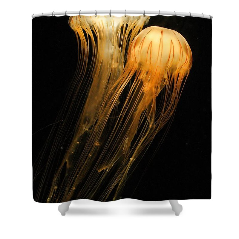 Sea Anemone Shower Curtain featuring the photograph Jellyfish On Black by Angela Rath
