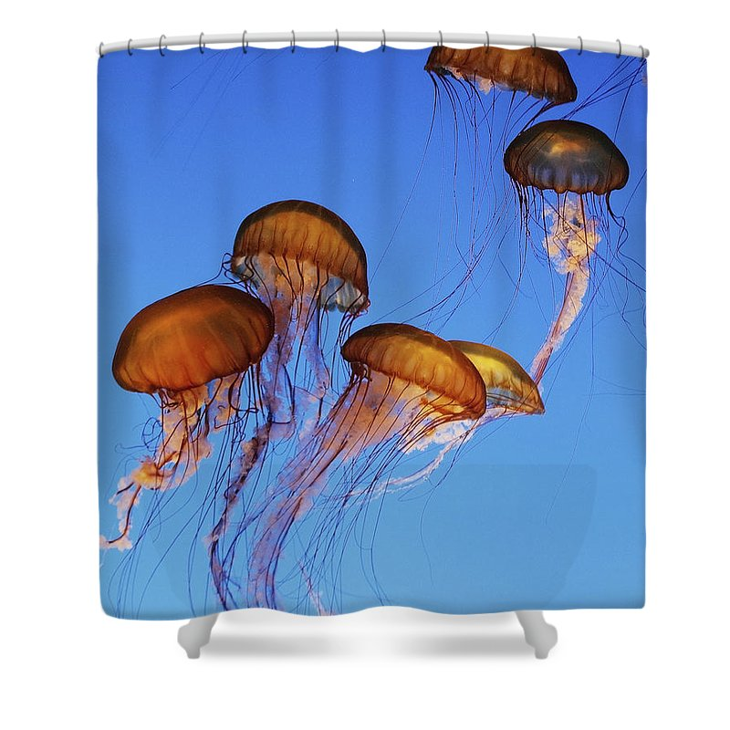 Jellyfish Shower Curtain featuring the photograph Jellyfish Swarm by Robert Woodward