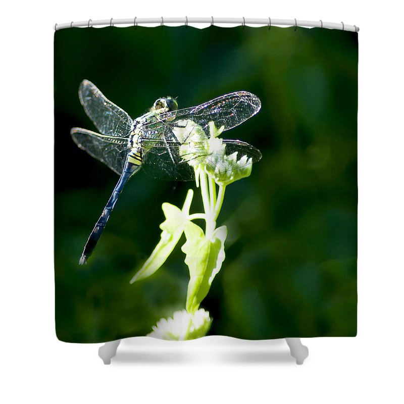 Eastern Pondhawk Shower Curtain featuring the photograph Jeweled Wings by Norman Johnson