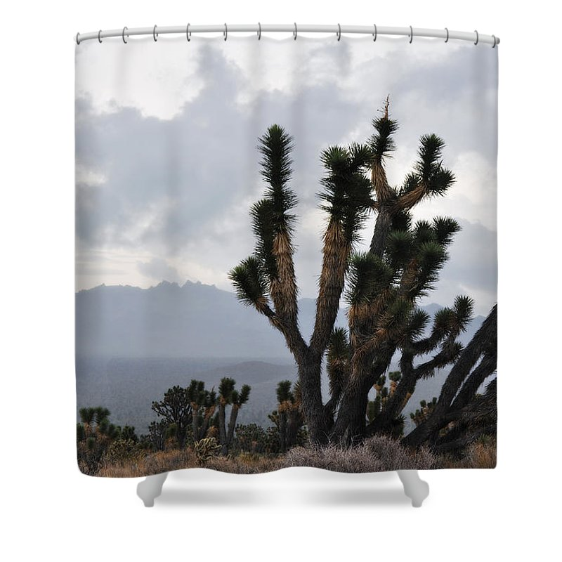 Joshua Tree Shower Curtain featuring the photograph Joshua Tree Forest Ivanpah Valley by Kyle Hanson