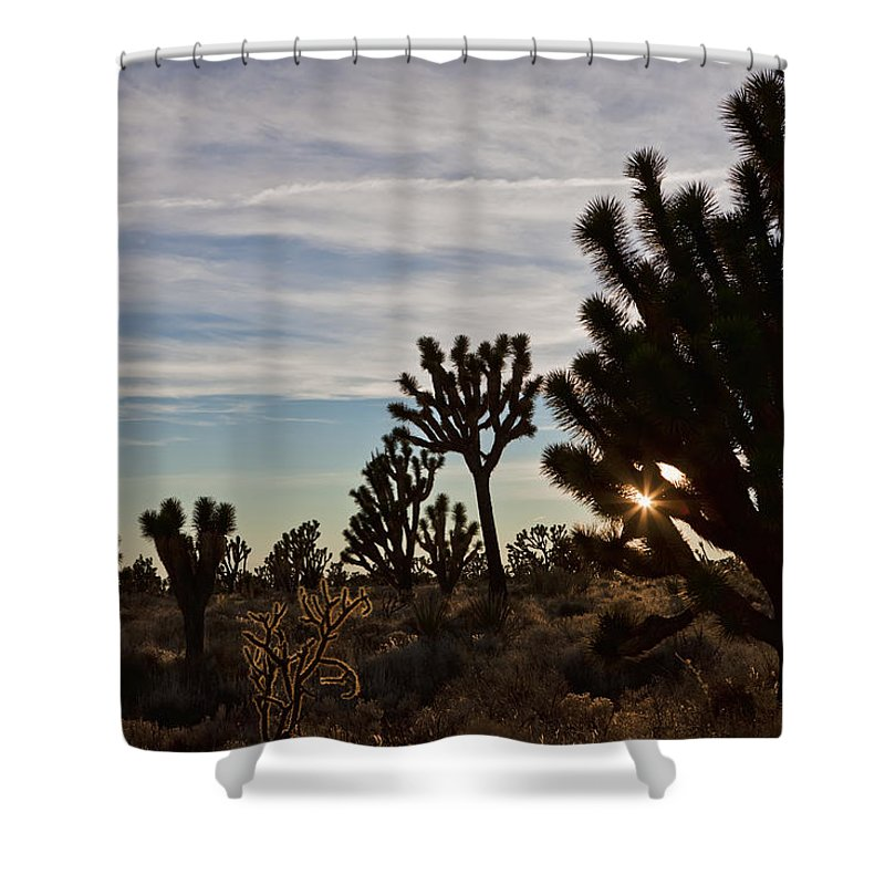 Beige Shower Curtain featuring the photograph Joshua Trees by Evie Carrier