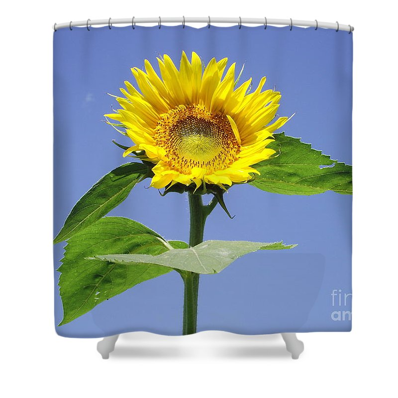 Sunflower Shower Curtain featuring the photograph Joy by Michelle Welles
