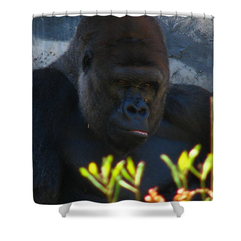 Patzer Shower Curtain featuring the photograph Jungle Master by Greg Patzer