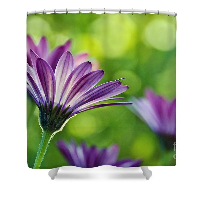 Daisies Shower Curtain featuring the photograph Just Daisies by Susie Peek