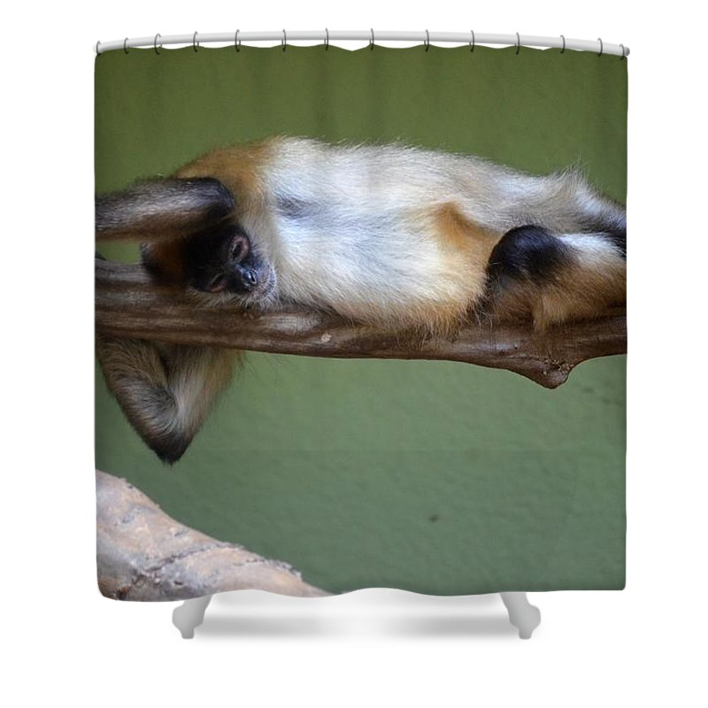 Just Hanging About Shower Curtain featuring the photograph Just Hanging About by Maria Urso