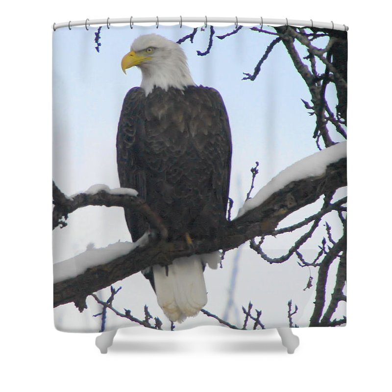 Eagles Shower Curtain featuring the photograph Just Hanging Out by Jeff Swan