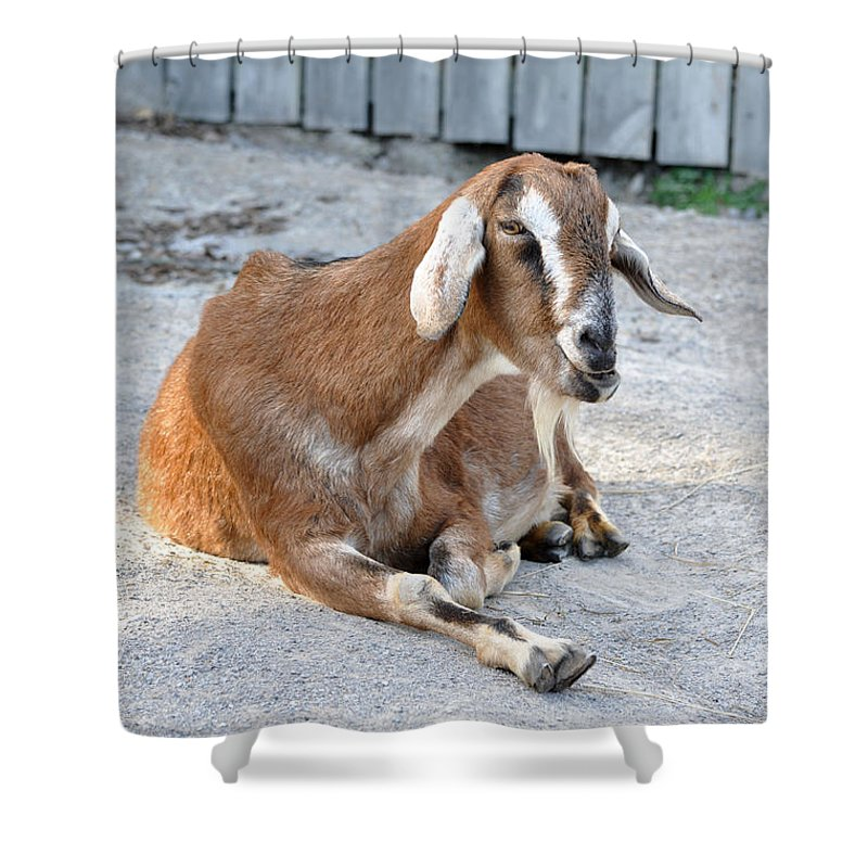 Animals Shower Curtain featuring the photograph Just Leave Me Alone by Jan Amiss Photography