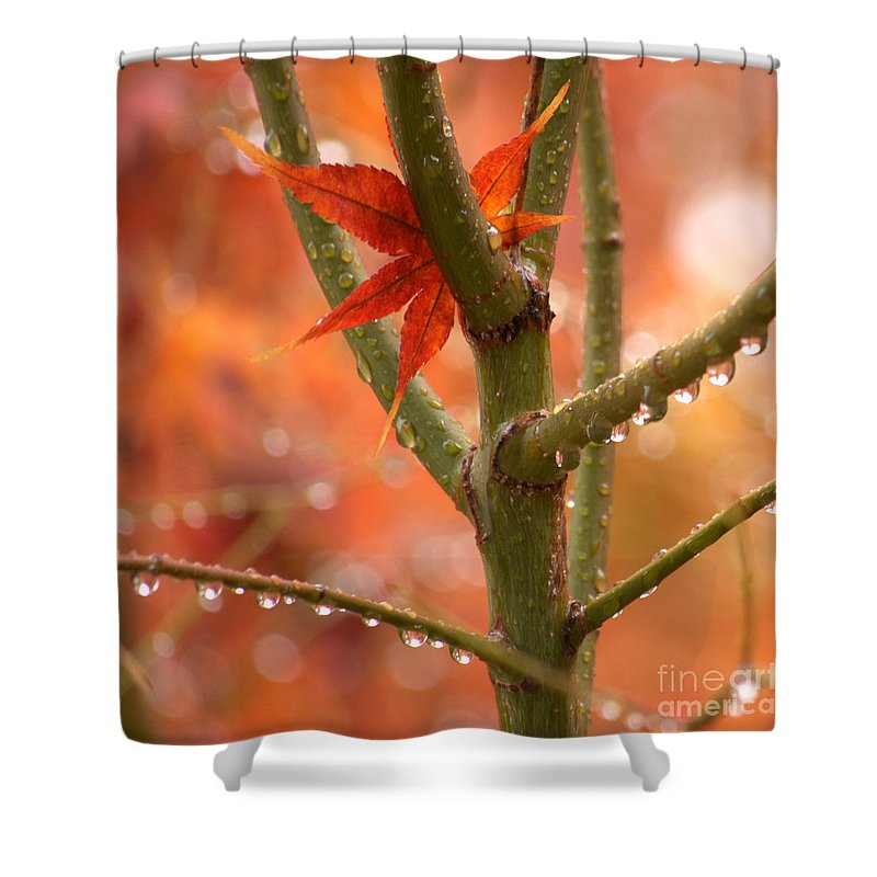 Diana Graves Photography Shower Curtain featuring the photograph Just One Leaf by K D Graves