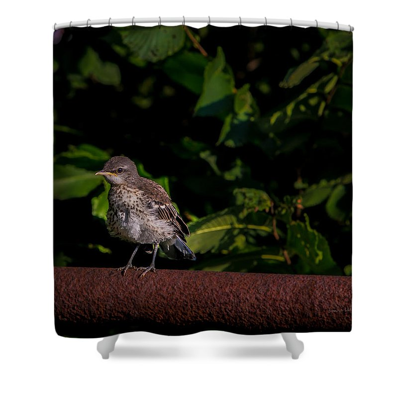 Bird Shower Curtain featuring the photograph Just Out Of The Nest by Donna Lee