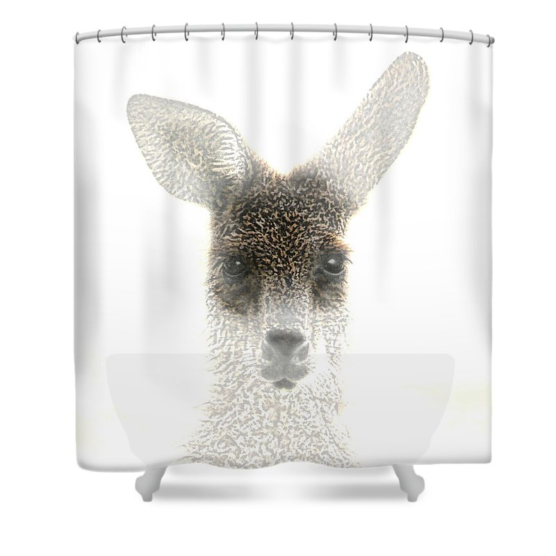 Animals Shower Curtain featuring the photograph Kangaroo by Holly Kempe