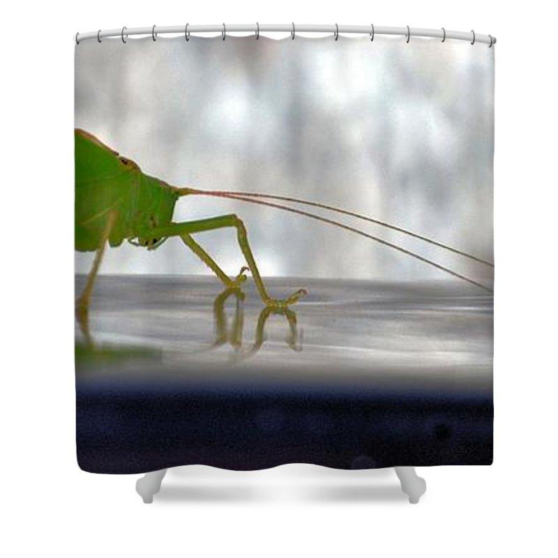 Katydid Reflection Shower Curtain featuring the photograph Katydid Reflection by Maria Urso