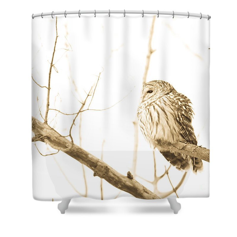 Owls Shower Curtain featuring the photograph Keeping Watch by Cheryl Baxter