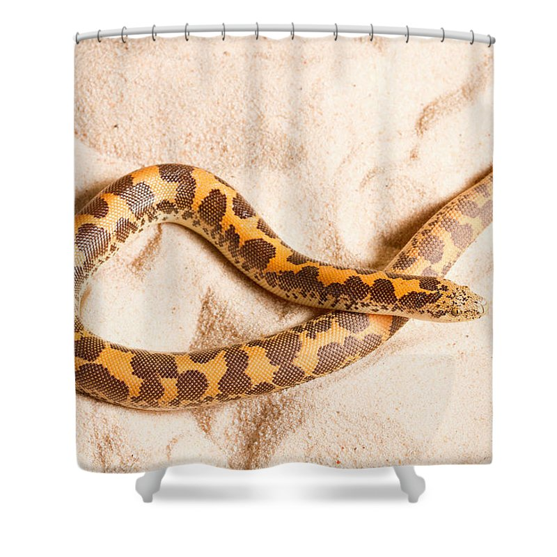 Squamata Shower Curtains