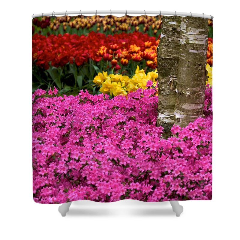 Holland Shower Curtain featuring the photograph Keukenhof Floral Strata by David Beebe