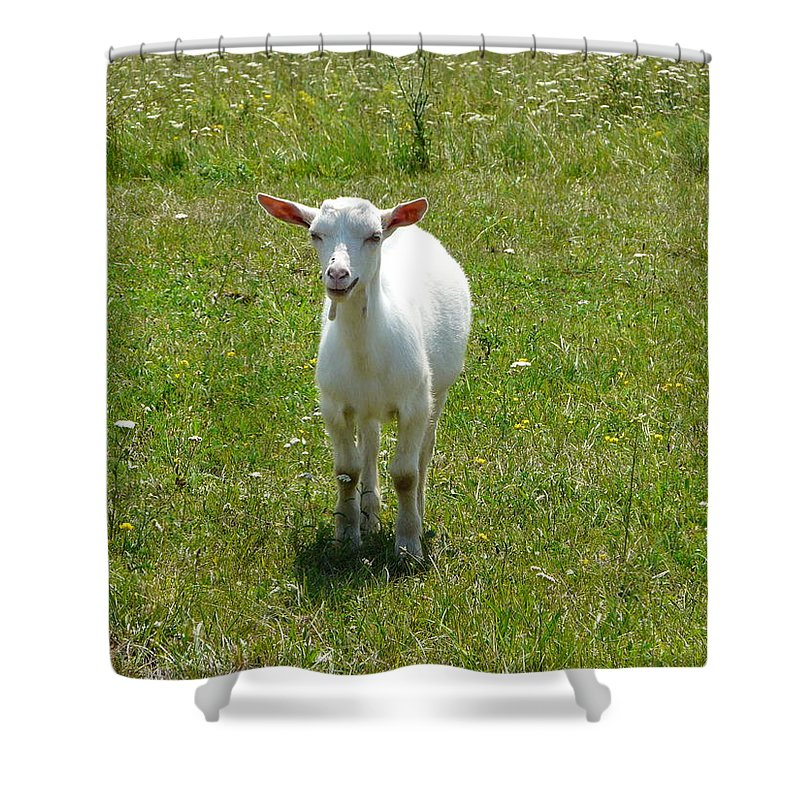 Kid Shower Curtain featuring the photograph Kid Goat by Valerie Ornstein