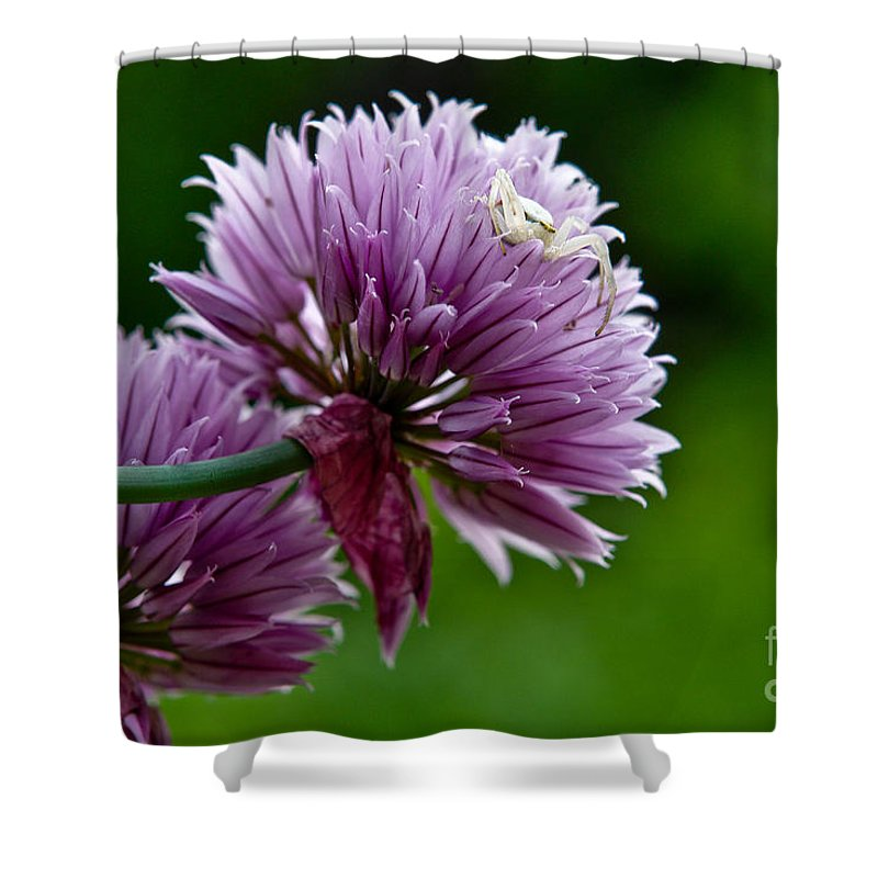 Flower Shower Curtain featuring the photograph Killer In Hiding by Brothers Beerens