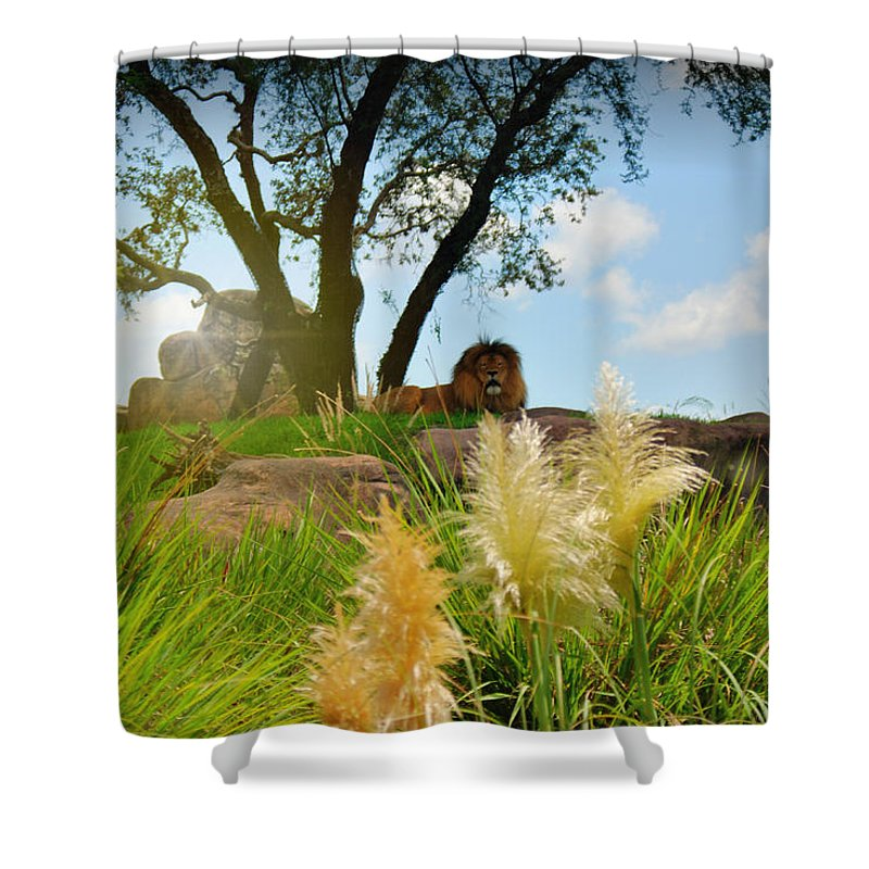 Lion Shower Curtain featuring the photograph King Cat by Joedes Photography
