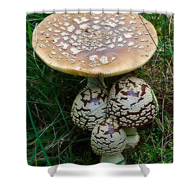 Finland Shower Curtain featuring the photograph King Of Sweden Amanita by Jouko Lehto