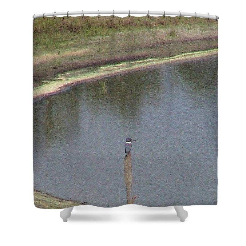 Kingfisher Shower Curtain featuring the photograph Kingfisher On Post by Robert Norcia
