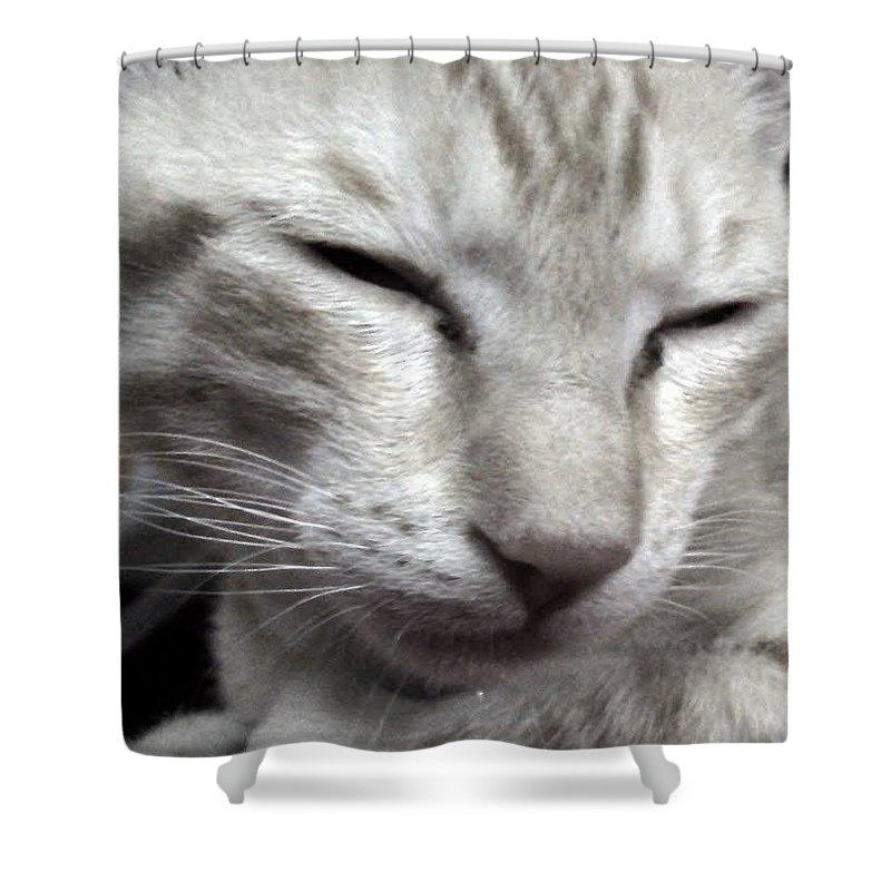 Kitten Black N White Shower Curtain featuring the photograph Kitten by Payal Patki