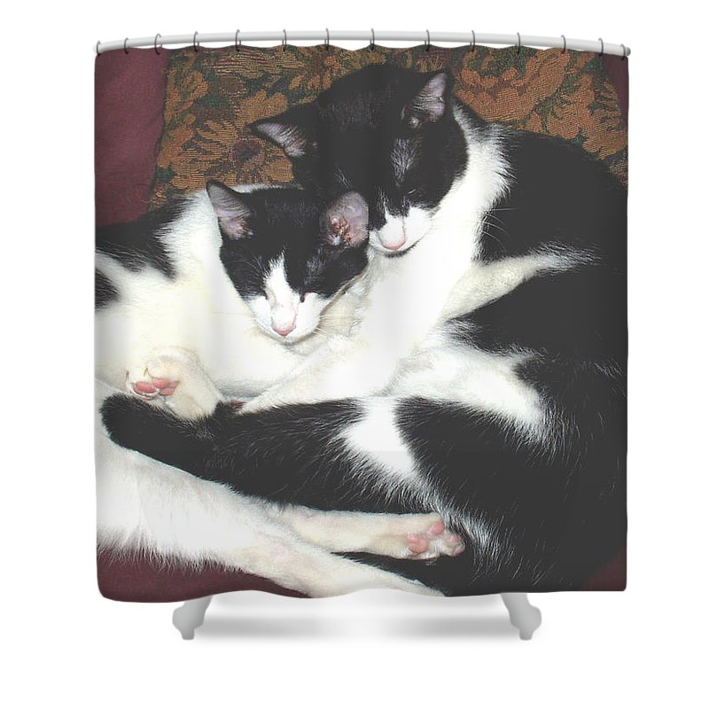 Brothers Shower Curtain featuring the photograph Kitty Love by Marna Edwards Flavell