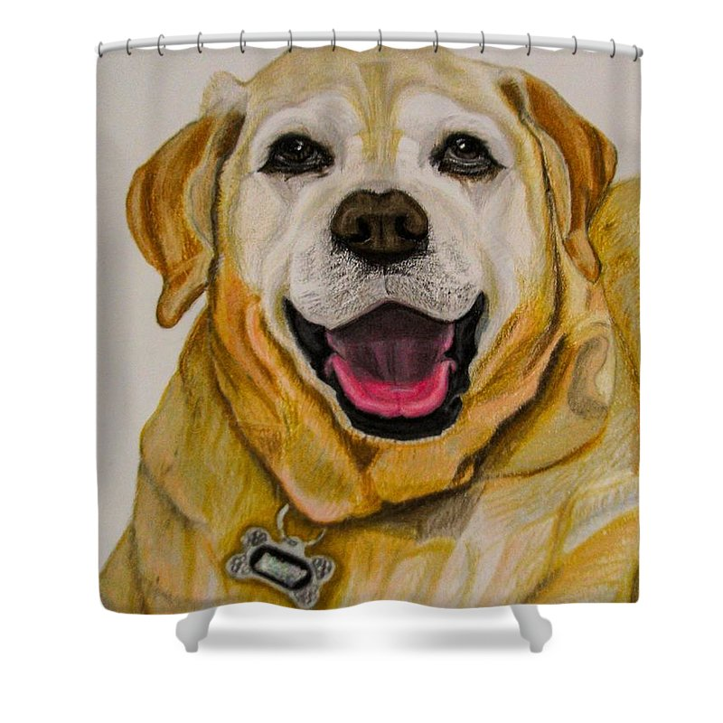 Labrador Shower Curtain featuring the drawing Labrador Retriever Drawing by Zina Stromberg