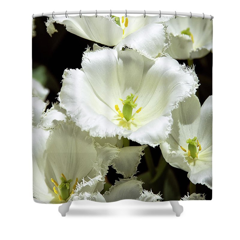 White Flower Shower Curtain featuring the photograph Lace Palm Springs by William Dey