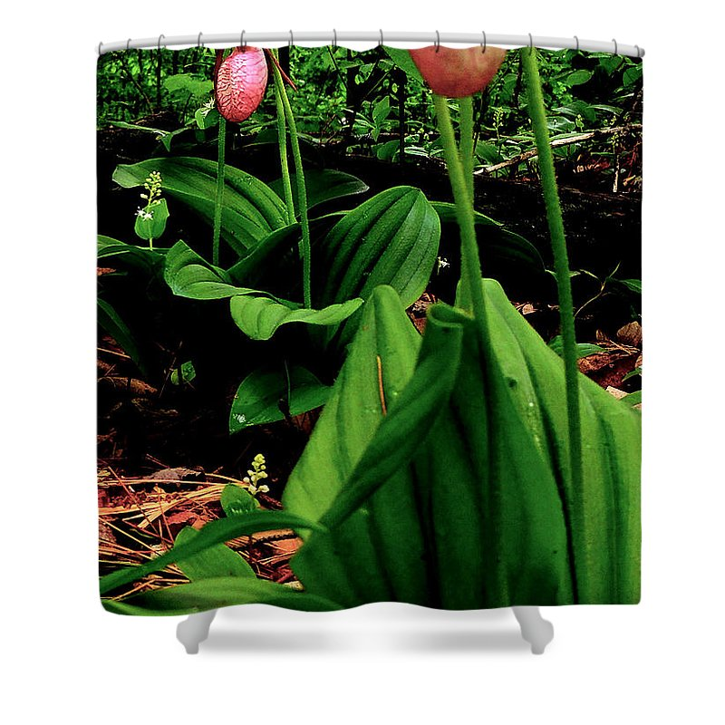 Wildflower Shower Curtain featuring the photograph Lady Slipper by Mim White