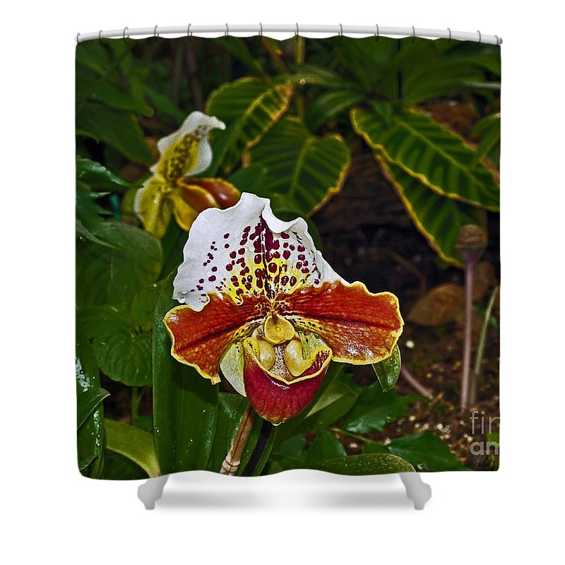 Orchid Shower Curtain featuring the photograph Lady Slipper Orchid by Howard Stapleton