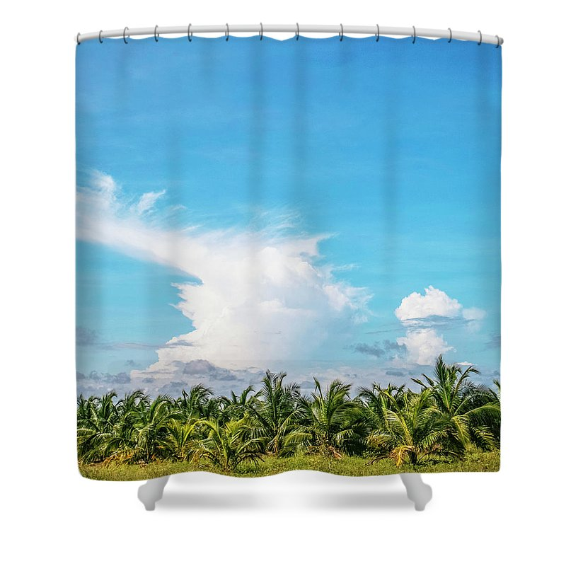 Tropical Tree Shower Curtain featuring the photograph Landscape With Young Coconut Trees by Peeterv