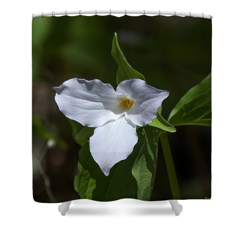Nature Shower Curtain featuring the photograph Large-flower Trillium Dspf279 by Gerry Gantt