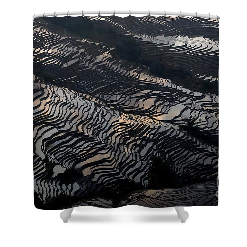 Agriculture Shower Curtain featuring the photograph Large Scale Of Rice Terrace by Kim Pin Tan