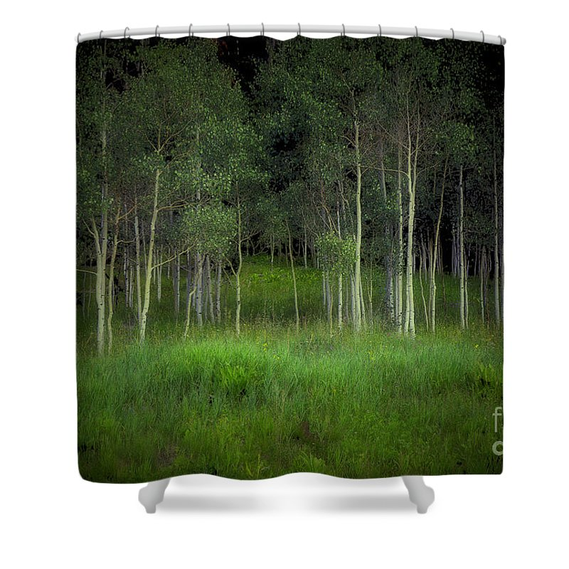 Tree Shower Curtain featuring the photograph Last Night's Dream by Madeline Ellis
