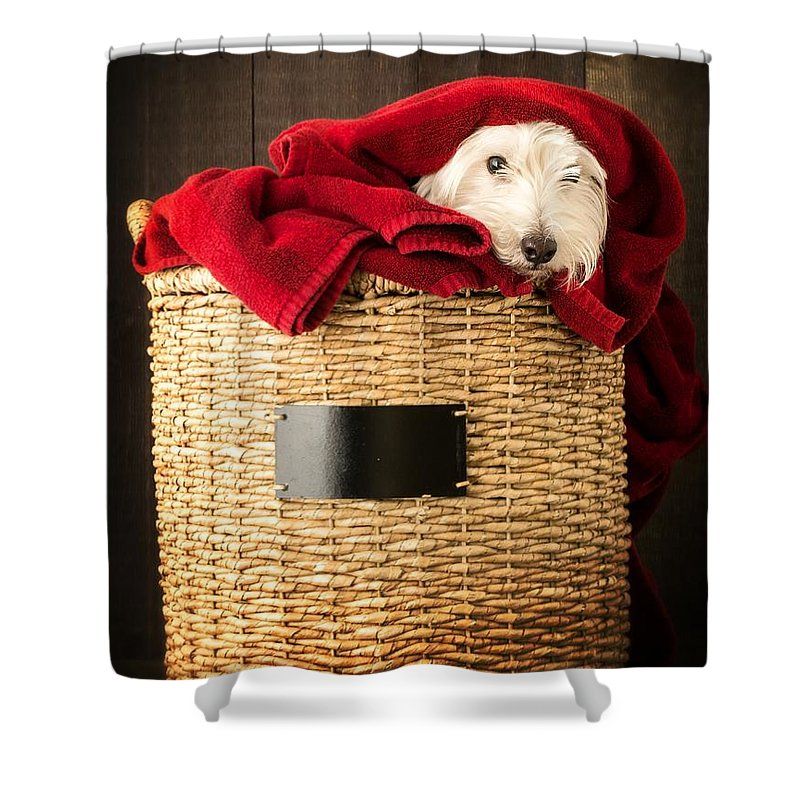 Dog Shower Curtain featuring the photograph Laundry Day by Edward Fielding