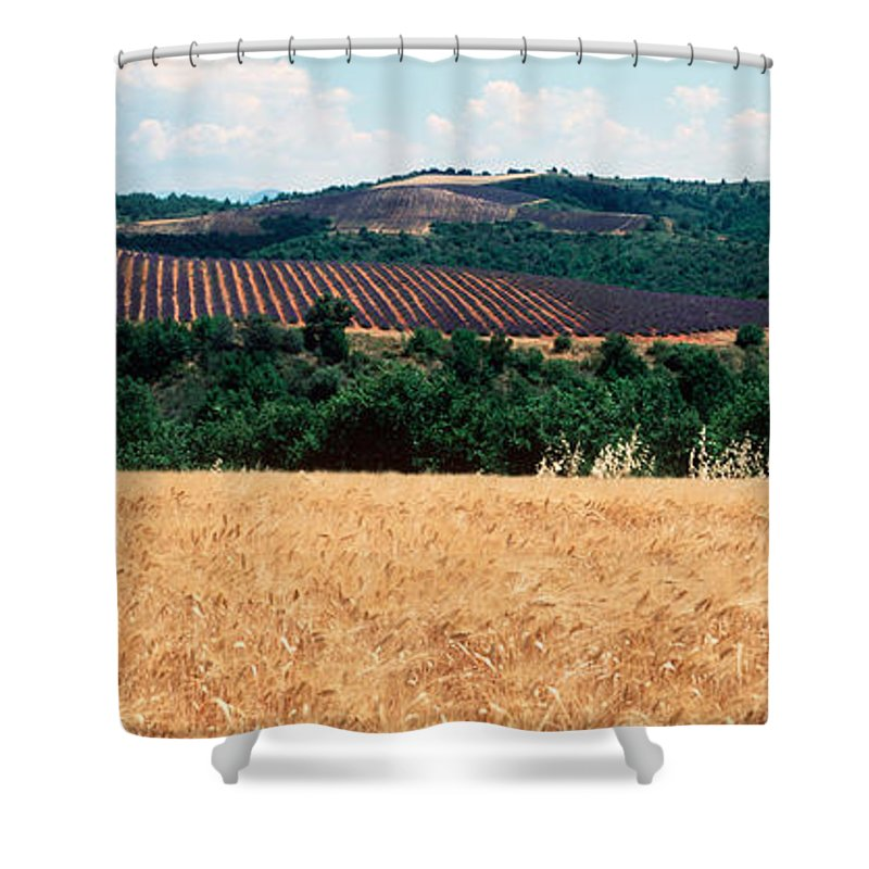 Photography Shower Curtain featuring the photograph Lavender And Corn Fields In Summer by Panoramic Images