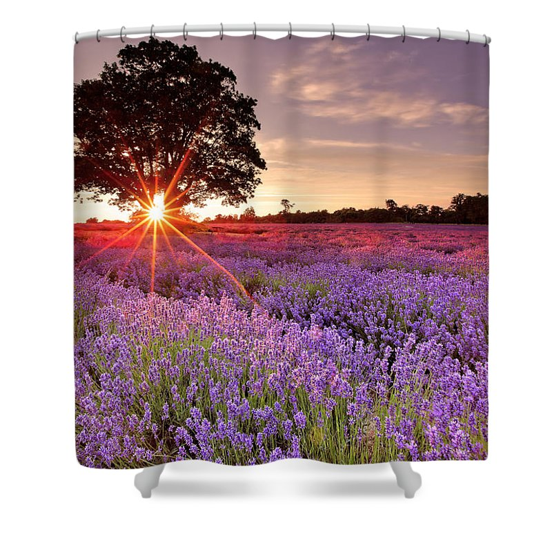 Scenics Shower Curtain featuring the photograph Lavender Field by Sandra Kreuzinger