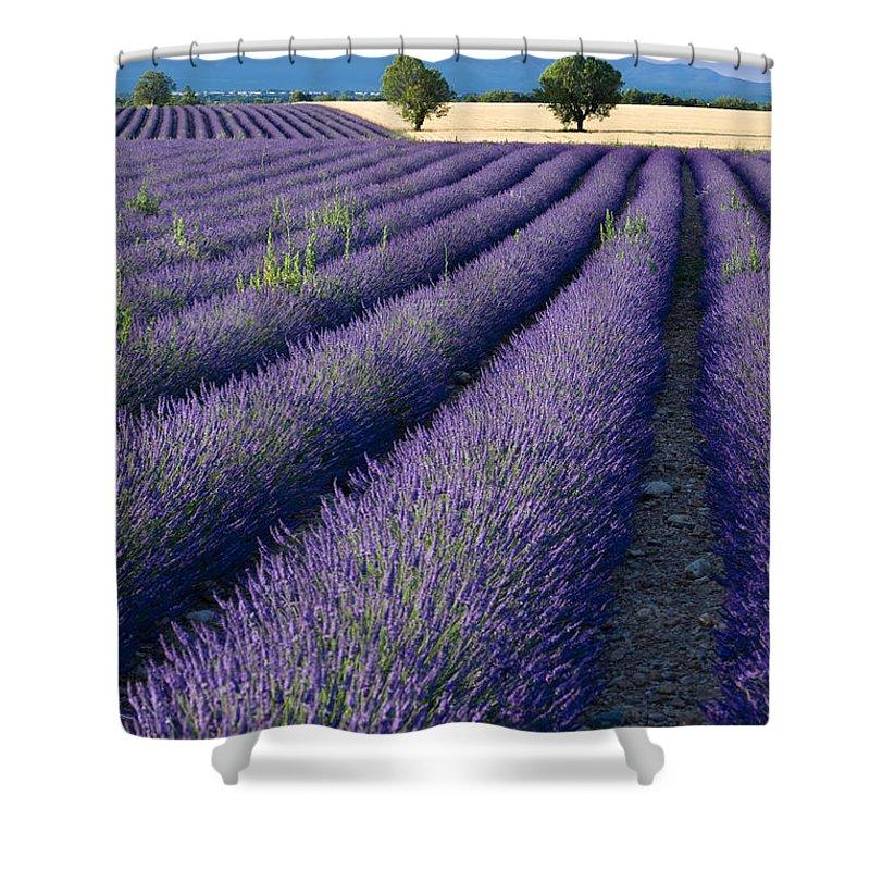 Lavender Fields Shower Curtain for Sale by Brian Jannsen