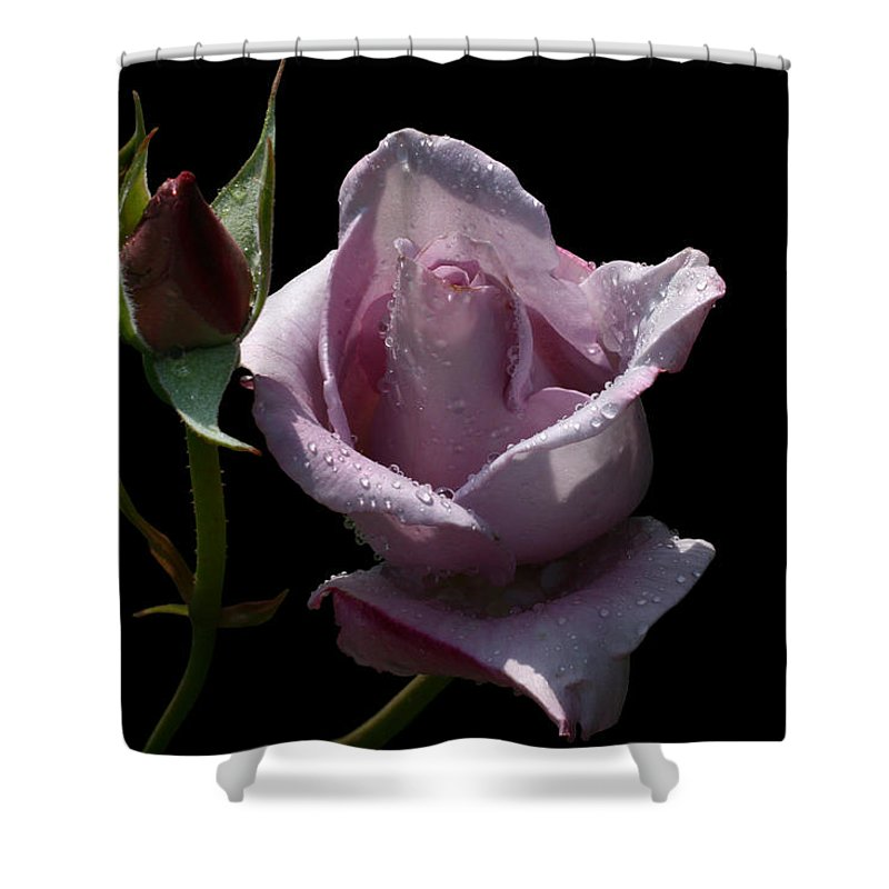 Rose Shower Curtain featuring the photograph Lavendish by Doug Norkum
