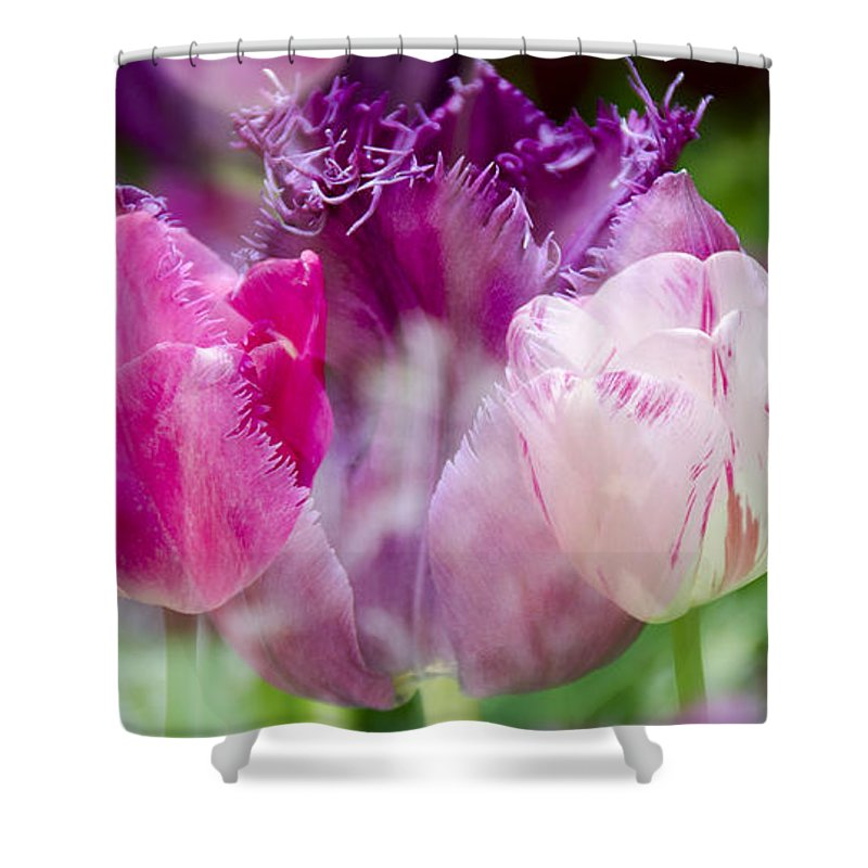 Flowers Shower Curtain featuring the photograph Layers Of Tulips II by Penny Lisowski