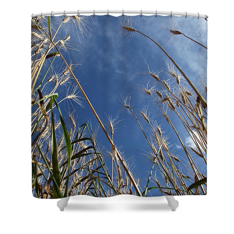 Field Shower Curtain featuring the photograph Laying In A Feild Looking Up by Chris Artist