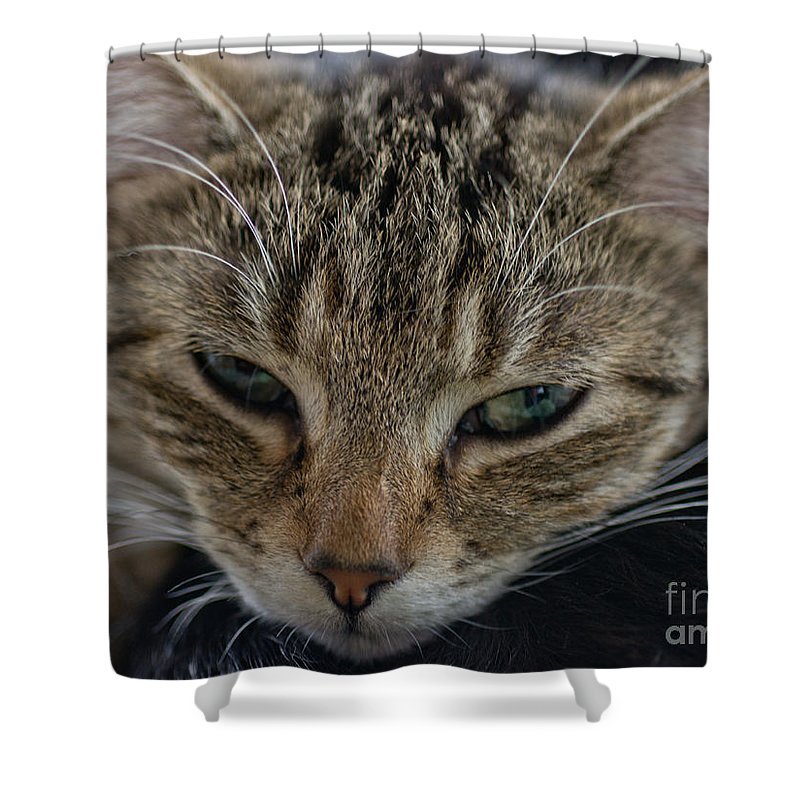 Kitten Shower Curtain featuring the photograph Lazin' On A Rainy Afternoon by Brothers Beerens