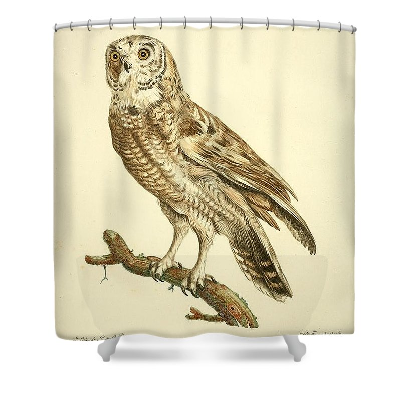 Audubon Shower Curtain featuring the painting Le Chou Cou Hou by Philip Ralley