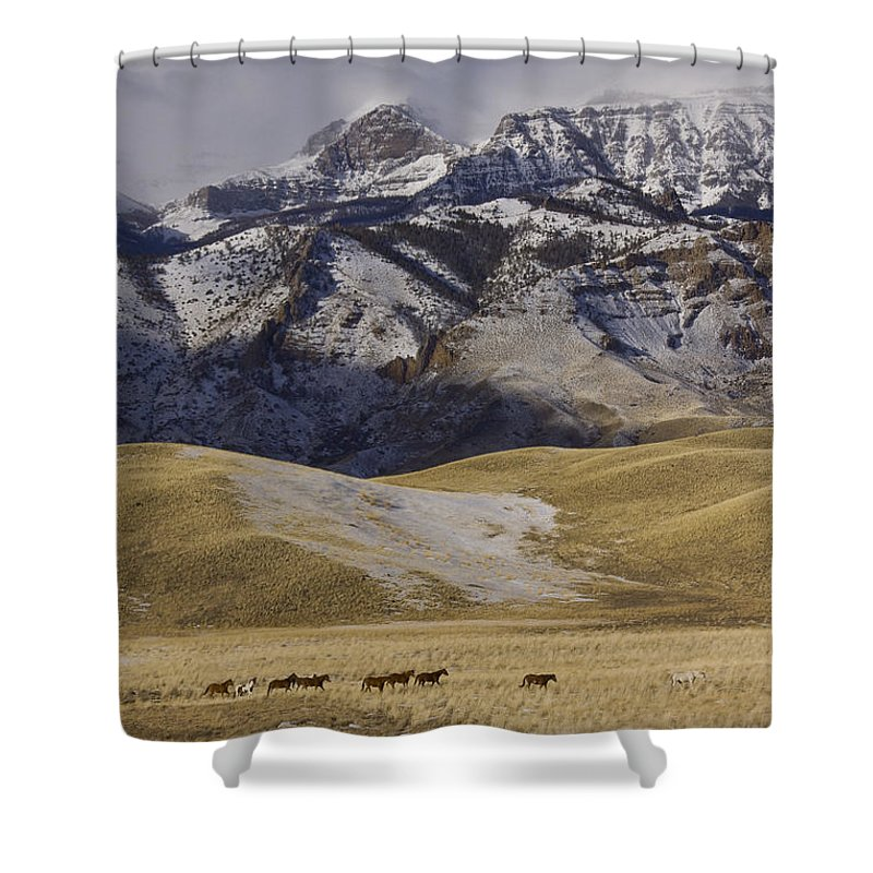 Horse Shower Curtain featuring the photograph Lead Horse by J L Woody Wooden