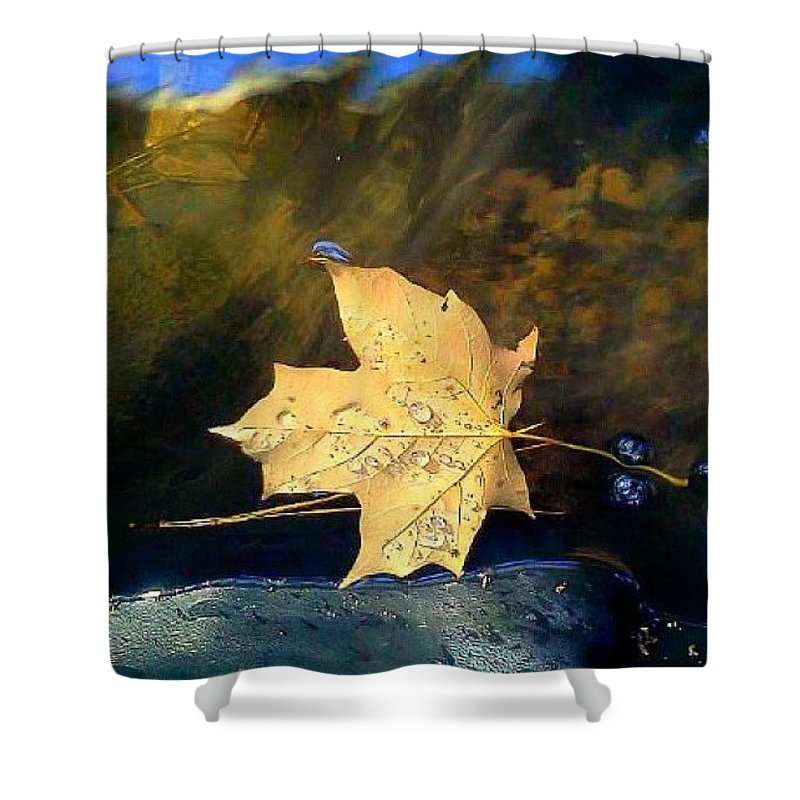 Leaf Shower Curtain featuring the photograph Leaf Afloat by Tara Potts