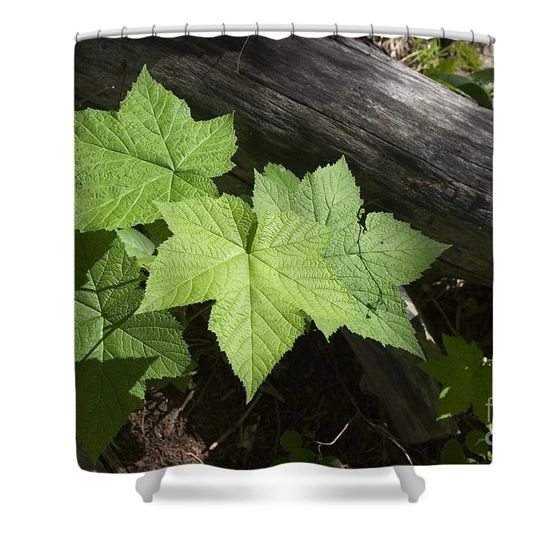 Leaf And Log Shower Curtain featuring the photograph Leaf And Log by J L Woody Wooden