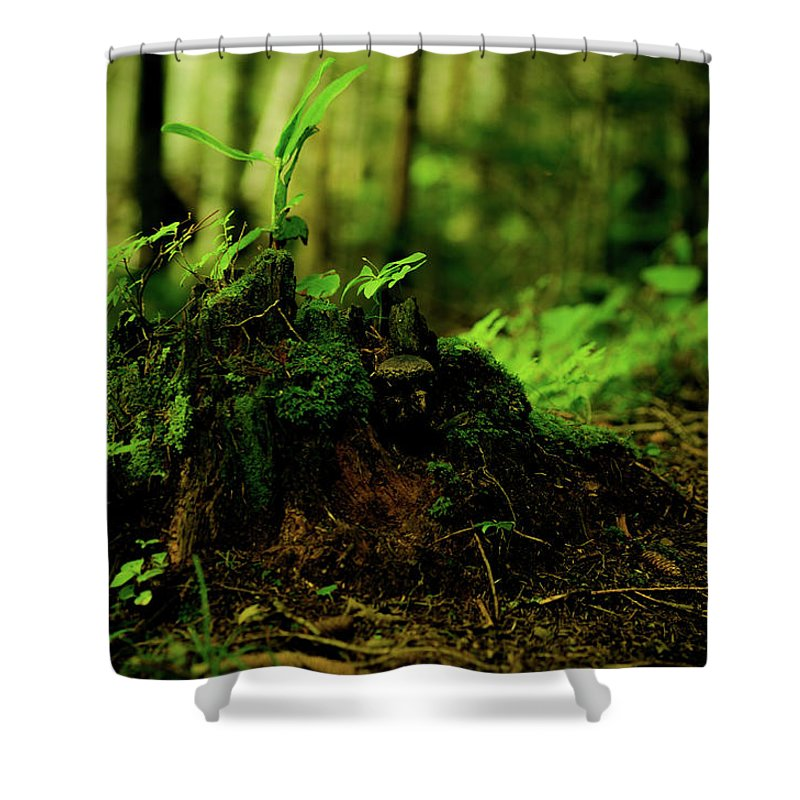 Hokkaido Shower Curtain featuring the photograph Leaf Bud by Plasticboystudio