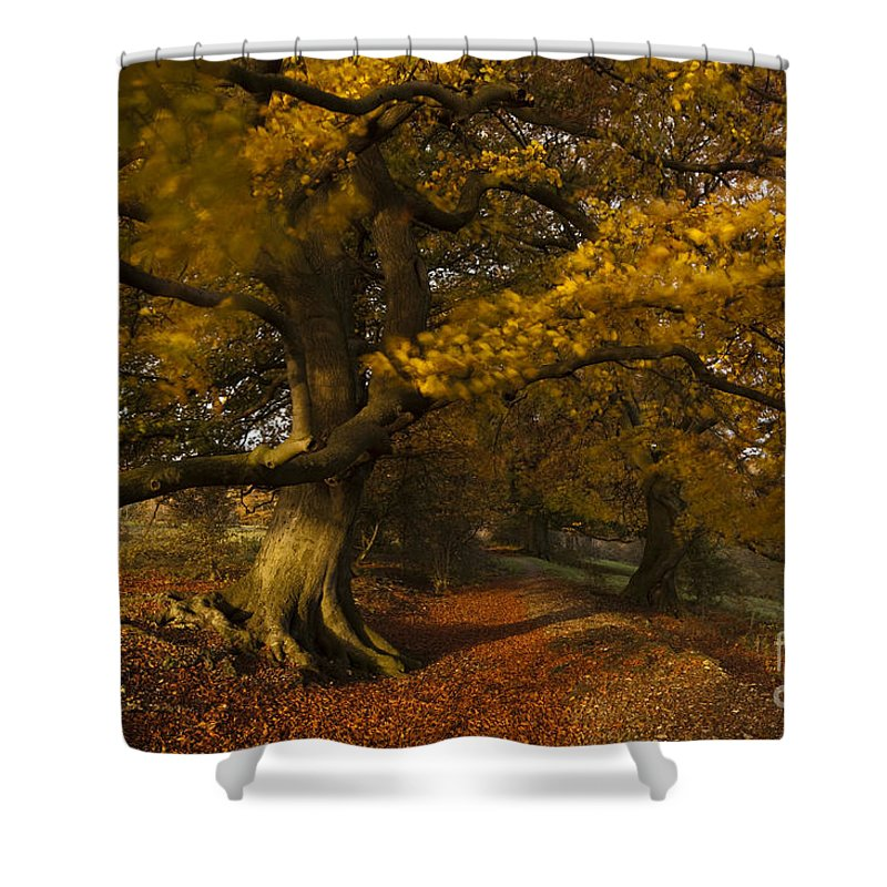 Abstract Shower Curtain featuring the photograph Leafy Lane by Anne Gilbert