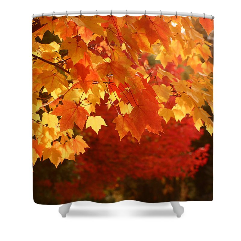 Leaves Shower Curtain featuring the photograph Fall Leaves In Afternoon Sun by Teresa Herlinger