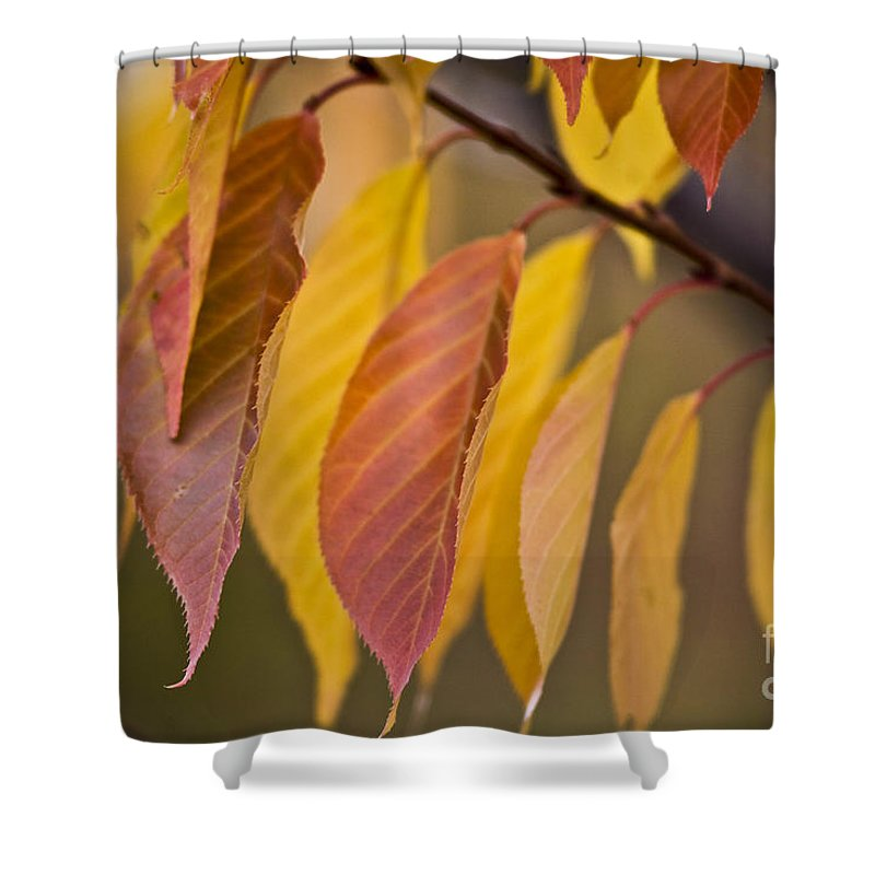 Heiko Shower Curtain featuring the photograph Leaves In Fall by Heiko Koehrer-Wagner